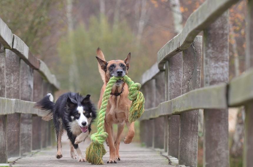 I velcí psi si rádi hrají