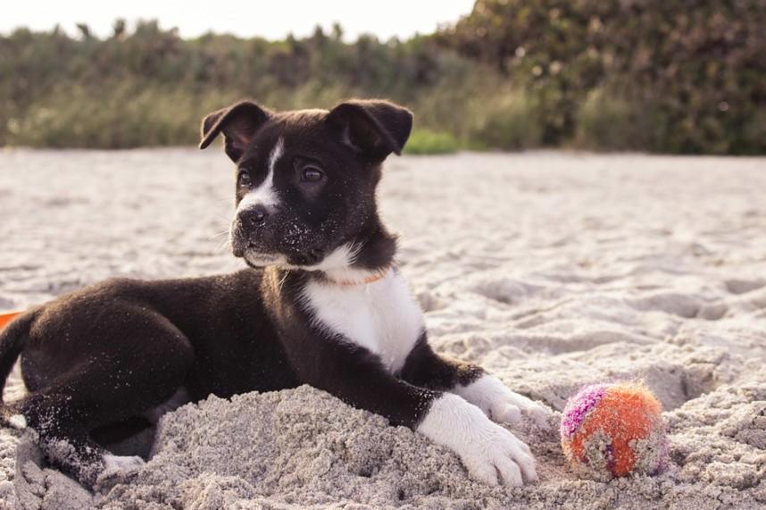 Jaké hračky a výbava pro štěně