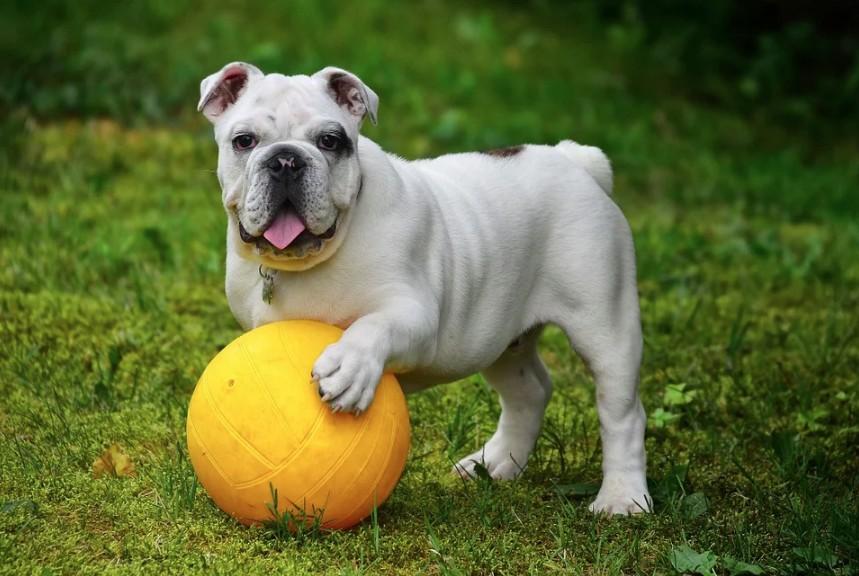 Jaké jsou nejlepší hračky pro psy