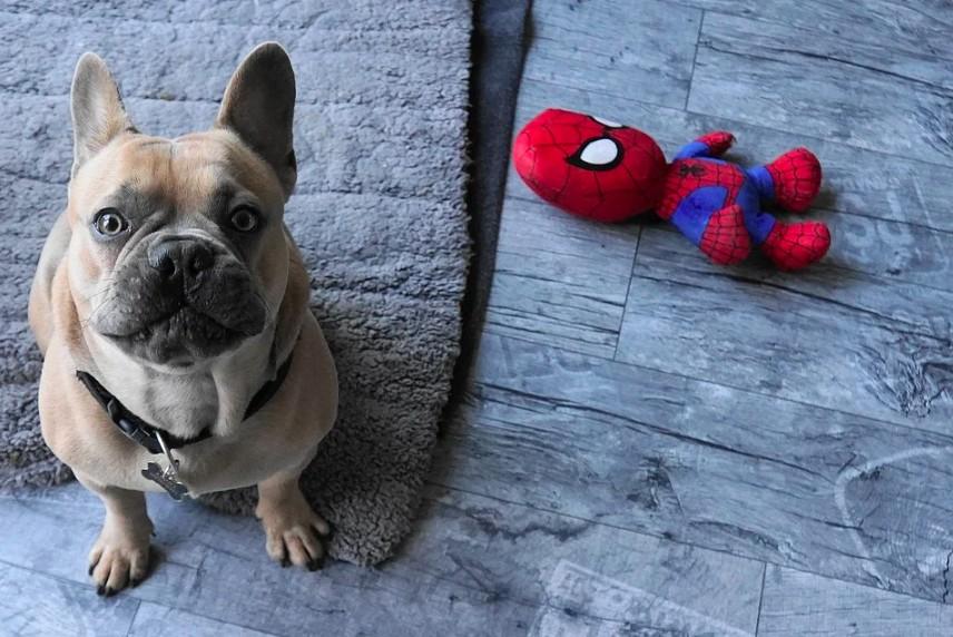Motivační hračky pro psy pomáhají s výcvikem