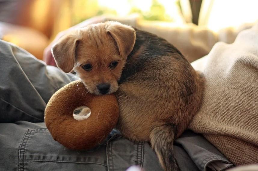 Nejlepší hračky pro štěňata a malé psy