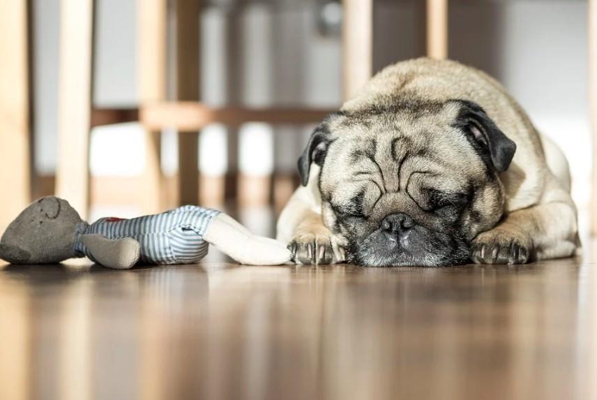 plyšové hračky pro psy jsou velmi oblíbené