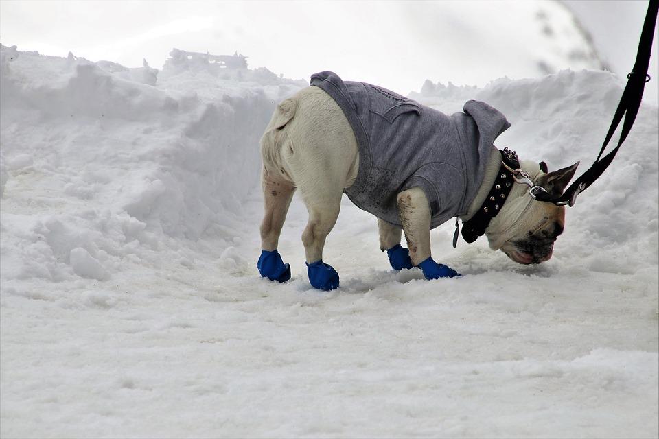 Boty pro psa chrání tlapky v zimě i v létě