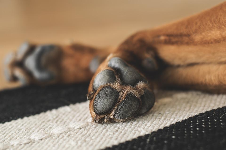 Boty pro psa jsou skvělá ochrana před zraněním tlapek