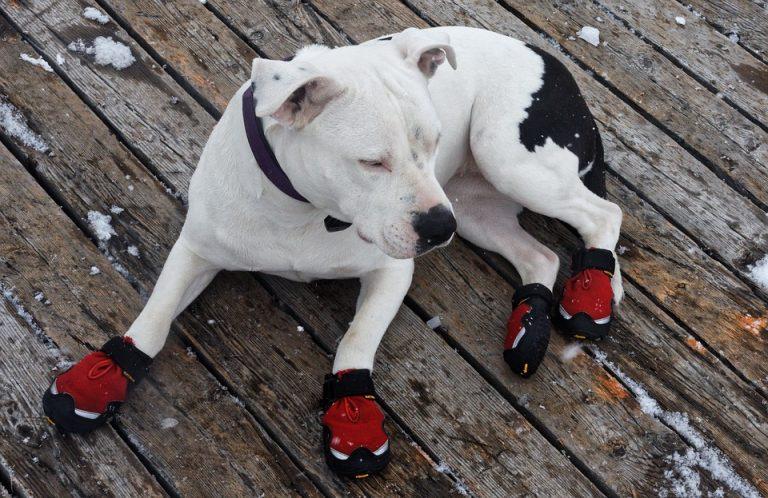Boty pro psa – průvodce výběrem
