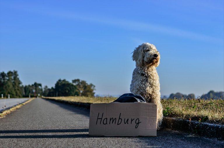 Jak na cestování se psem?
