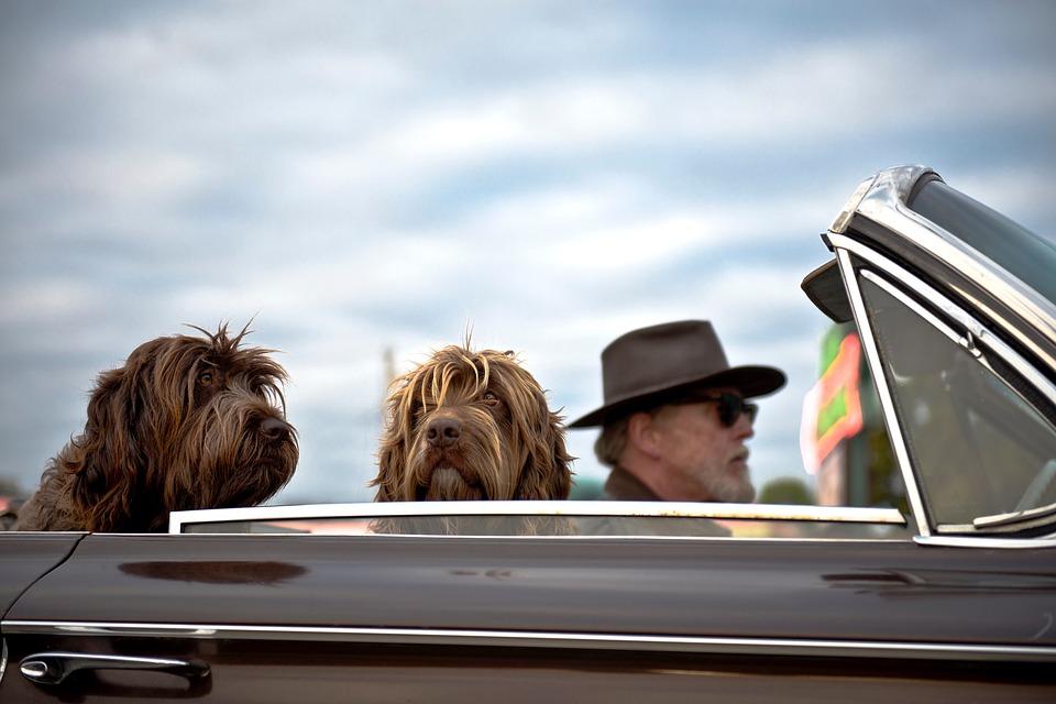 Cestovní pas pro psy