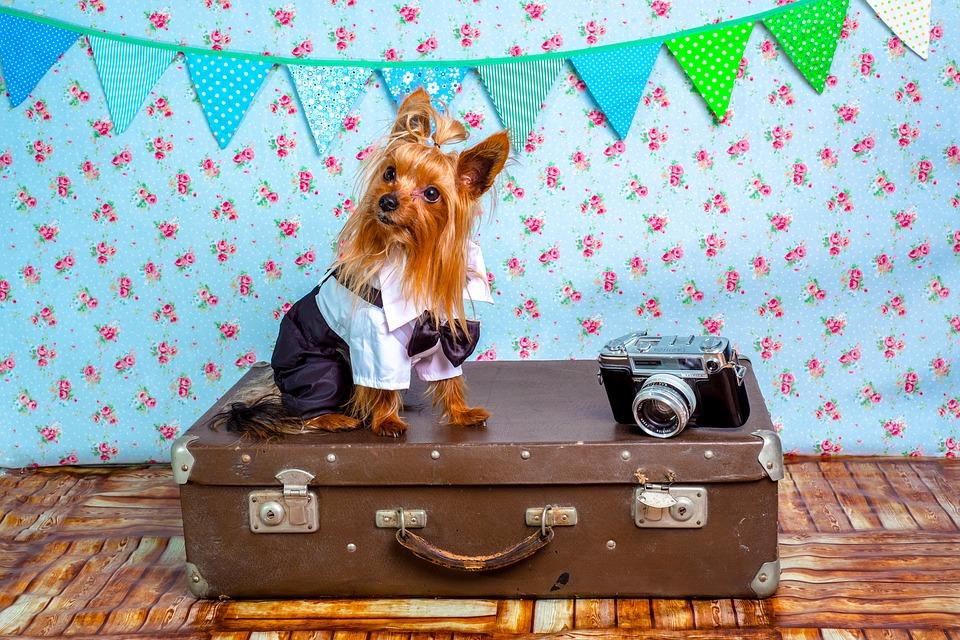 Cestujte se psem bez starostí