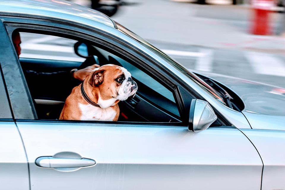 Jak cestovat se psem