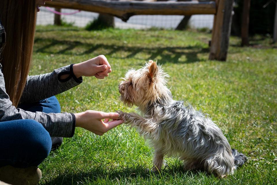 Jak naučit psa dát pac