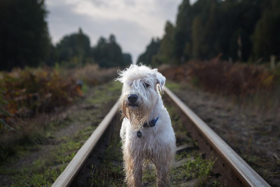 Jízda vlakem se psem