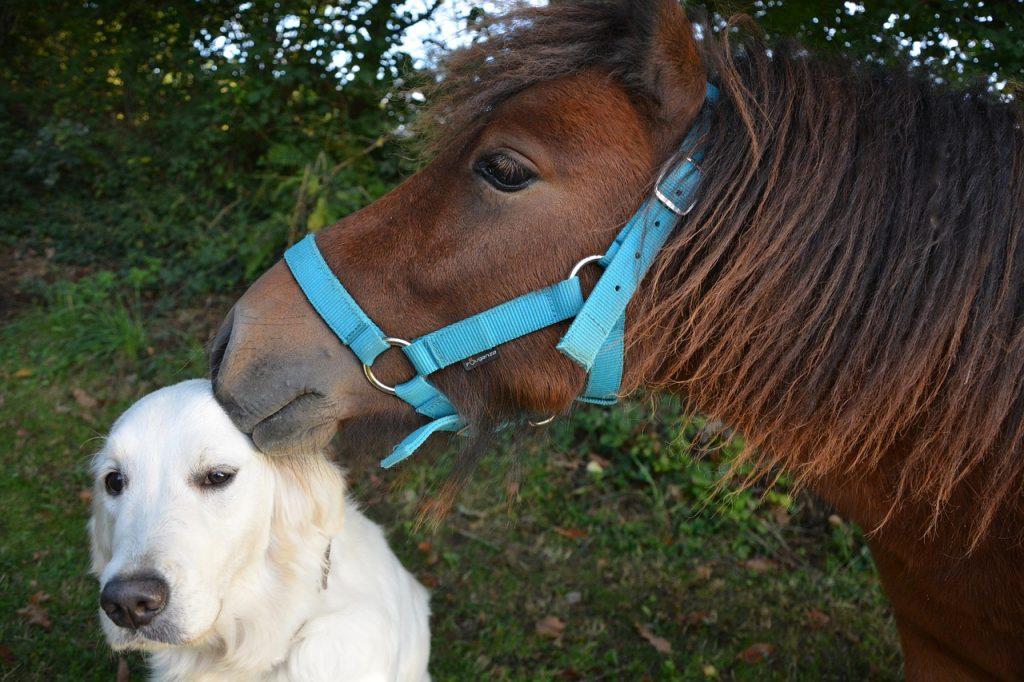 Kamarádi pes a kůň