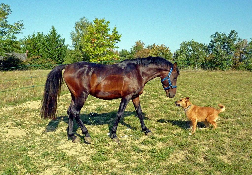 Kůň se psem