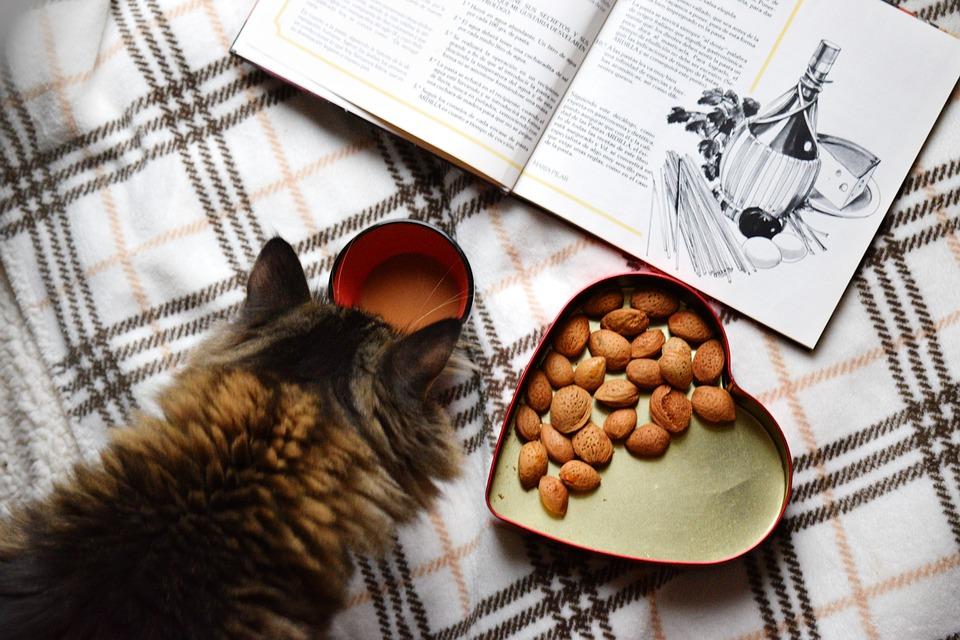 Jak krmit kočky a koťata