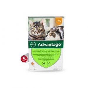 BAYER Advantage pro kočky
