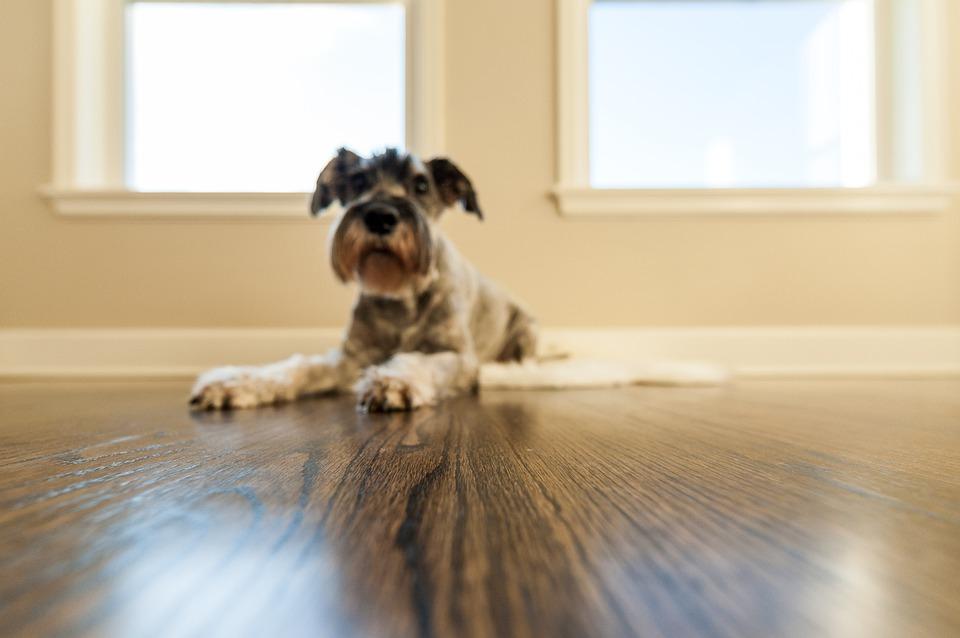 Na co si dát pozor se psem v bytě