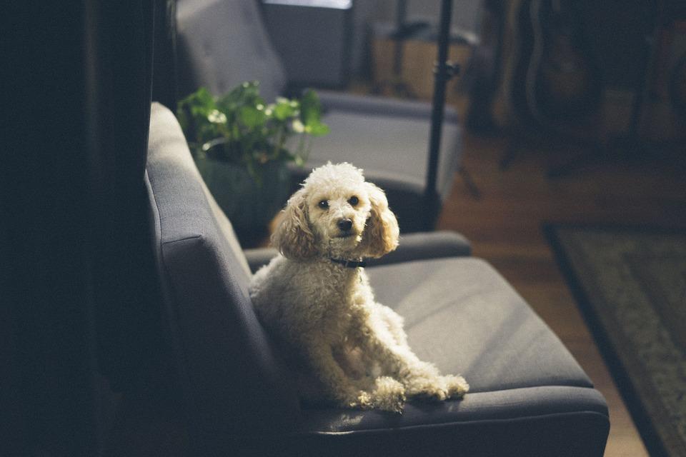 Nejlepší psi do bytu