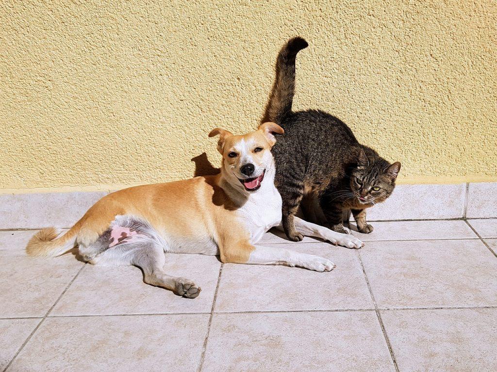 pes a kočka s klíštětem
