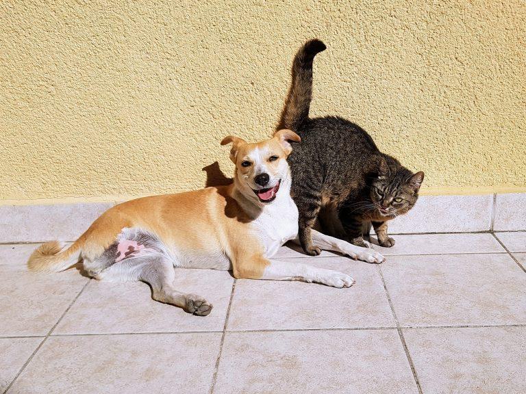 Klíště u psa nebo kočky: Jak postupovat?