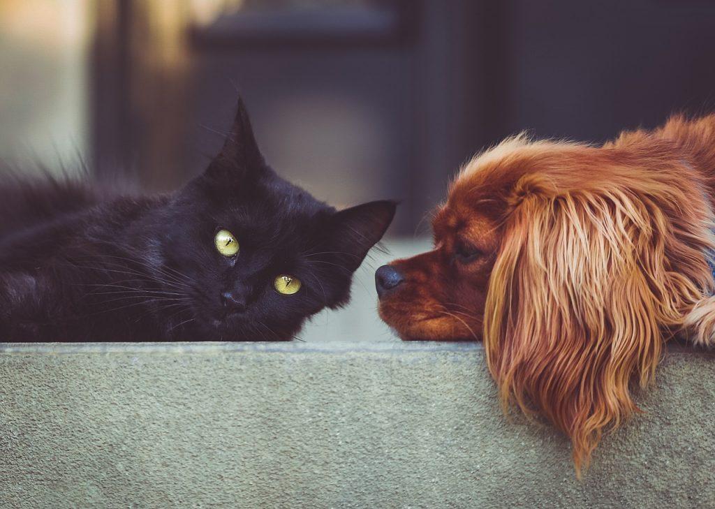 zbavení psa a kočky blech