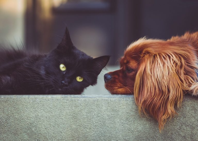 Jak zbavit psa a kočku blech