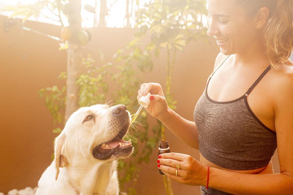 CBD olej pro psa, kočky a jiná zvířata