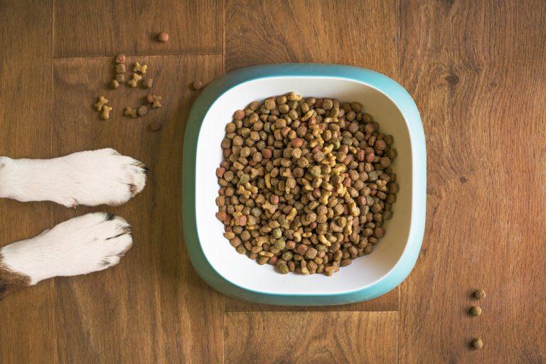 Jak vybrat ty nejlepší granule pro vašeho psa?