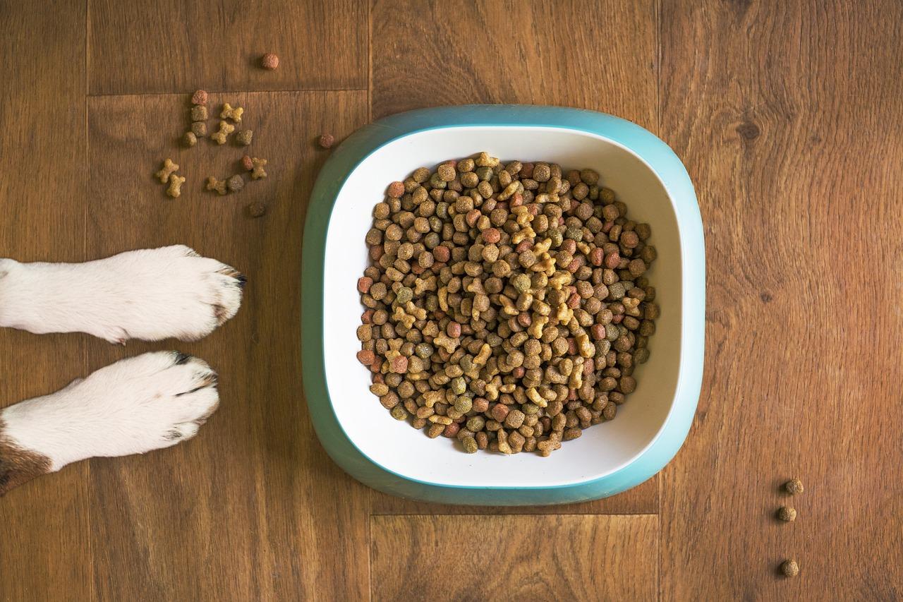 psí granule v misce