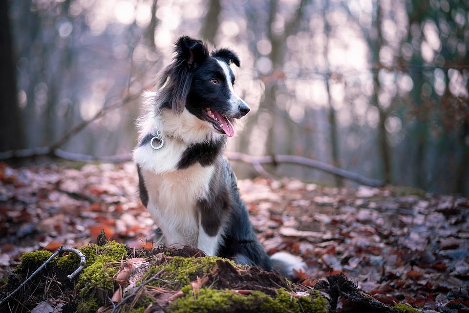 Jaký je nejlepší GPS obojek pro psa