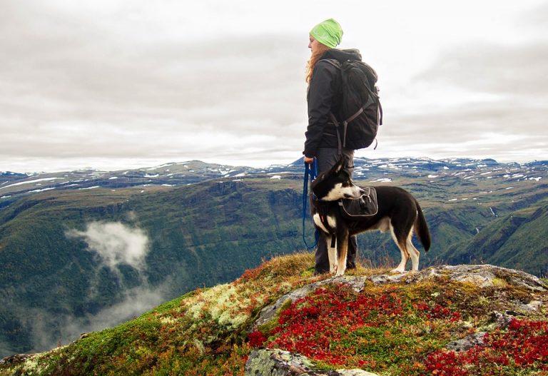 Jaké jsou nejlepší GPS obojky pro psy?
