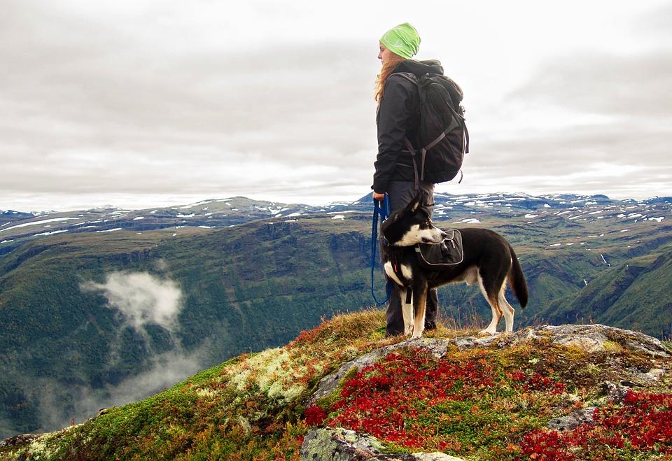 Mějte psa pod kontrolou i v terénu