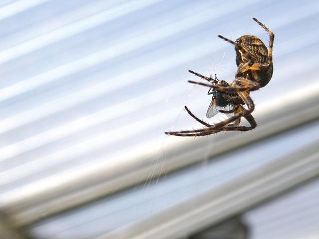 pavouk v domácnosti