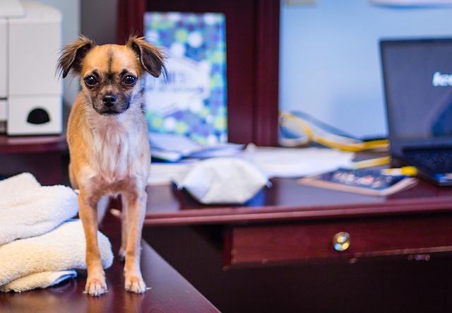 Online výcvik psů a štěňat: Jak vycvičit psa doma