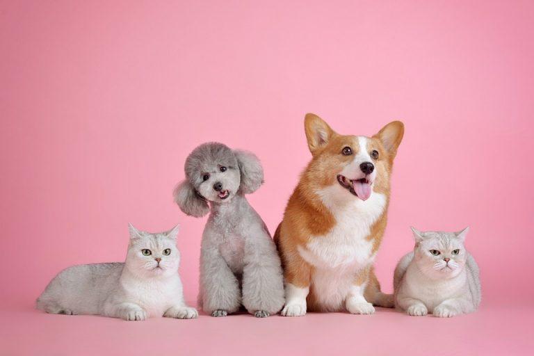 Pojištění psa a kočky: chraňte svého mazlíčka a ušetřete peníze