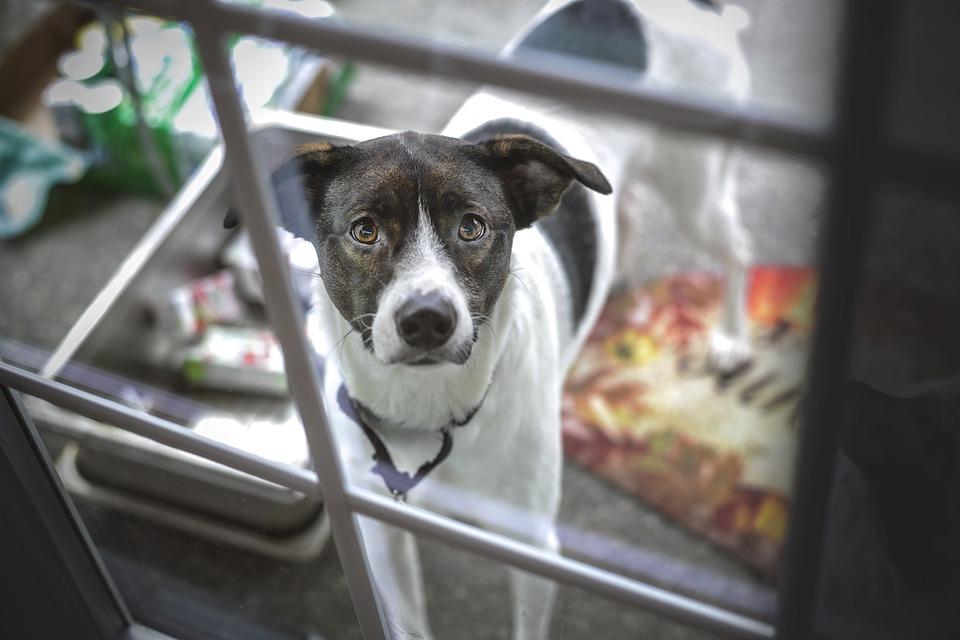 Povinnosti chovatele psů