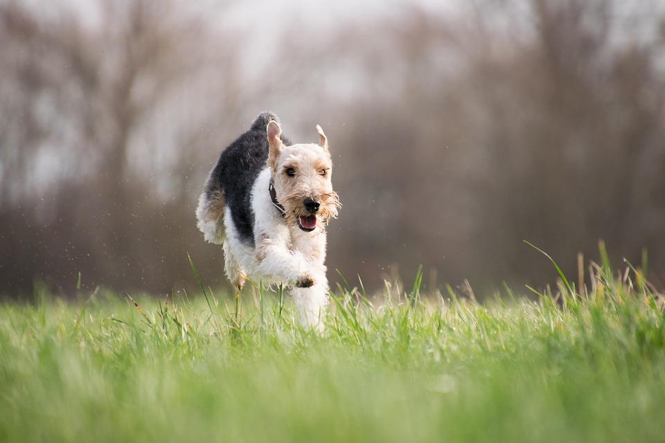 Dostatek pohybu, aby nebyl pes tlustý